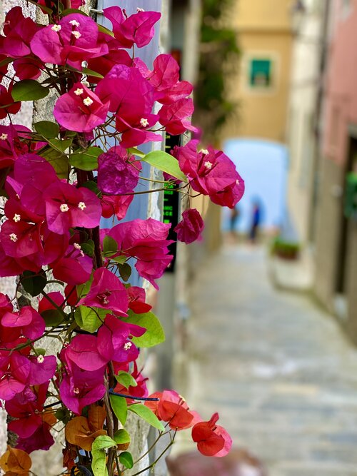 """Cinque Terre Itinerary:  """"Four days is hardly enough"""""""